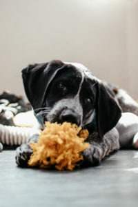the power of dogs for mental health and diabetes